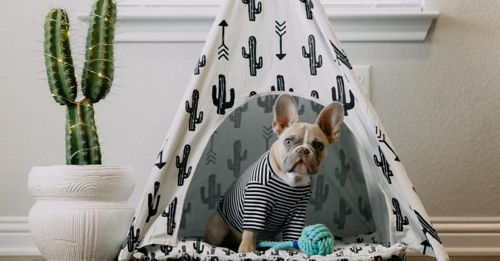 détection canine dans la lutte contre les punaises de lit